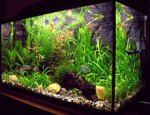 Aquarium online store – what do we need to remember while being there in order to offer our fishes attractive environment for development?
